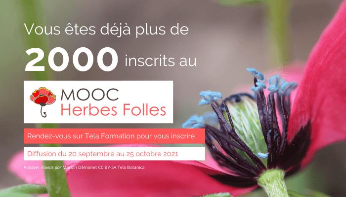 Plus de 2000 inscrits au MOOC Herbes Folles