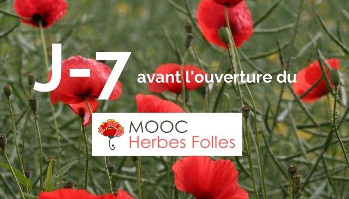 j-7 avant l'ouverture du MOOC Herbes Folles